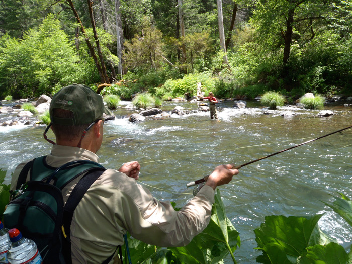 6 green drakes on the mccloud wild waters fly fishing for Green river fly fishing report