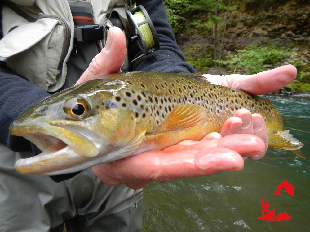 Mccloud river fishing wild waters fly fishing for Plenty of fish sacramento