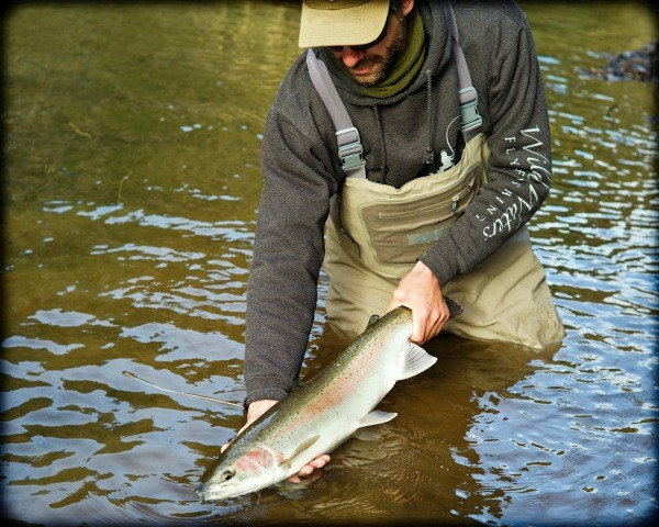 Oregon Coastal Steelhead