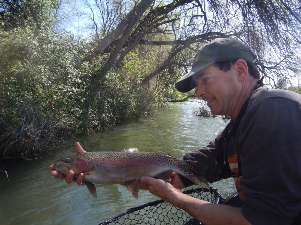 Perry Sims found some goof ones when the Lower Sac was at 17000 cfs.