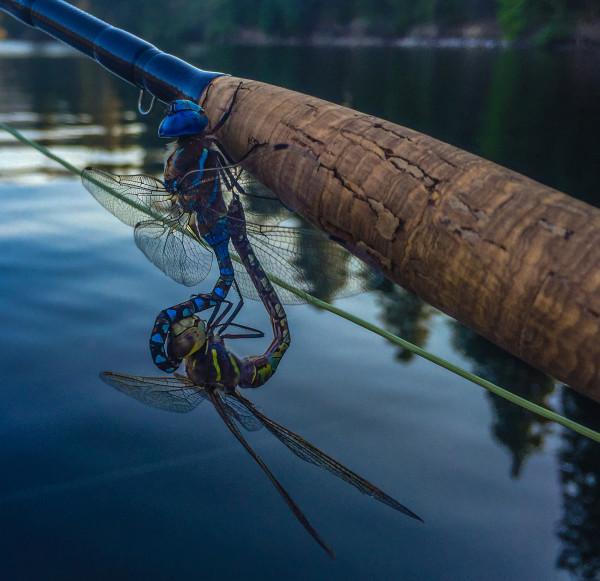 dragonflieslakesis